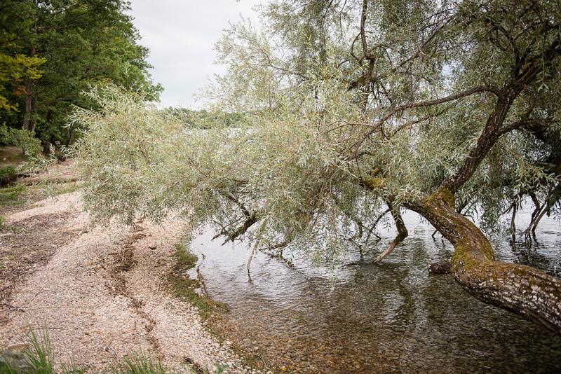 Uferbereich eines Sees als Location für die Hochzeitsfotos.